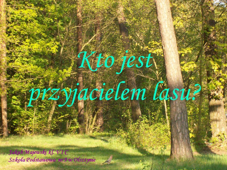 Kto jest przyjacielem lasu Jakub Majewski kl. V I C Szkoła Podstawowa nr 9 w Olsztynie