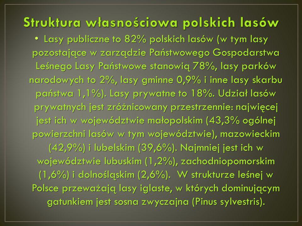Lasy publiczne to 82% polskich lasów (w tym lasy pozostające w zarządzie Państwowego Gospodarstwa Leśnego Lasy Państwowe stanowią 78%, lasy parków nar