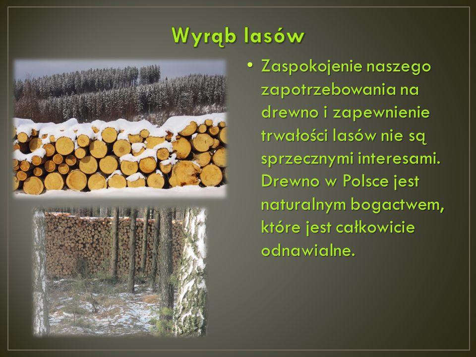 Zaspokojenie naszego zapotrzebowania na drewno i zapewnienie trwałości lasów nie są sprzecznymi interesami. Drewno w Polsce jest naturalnym bogactwem,