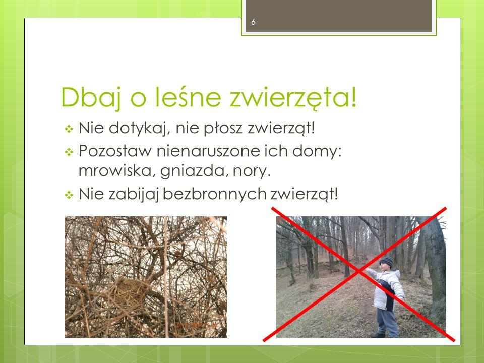 Dbaj o leśne zwierzęta. Nie dotykaj, nie płosz zwierząt.