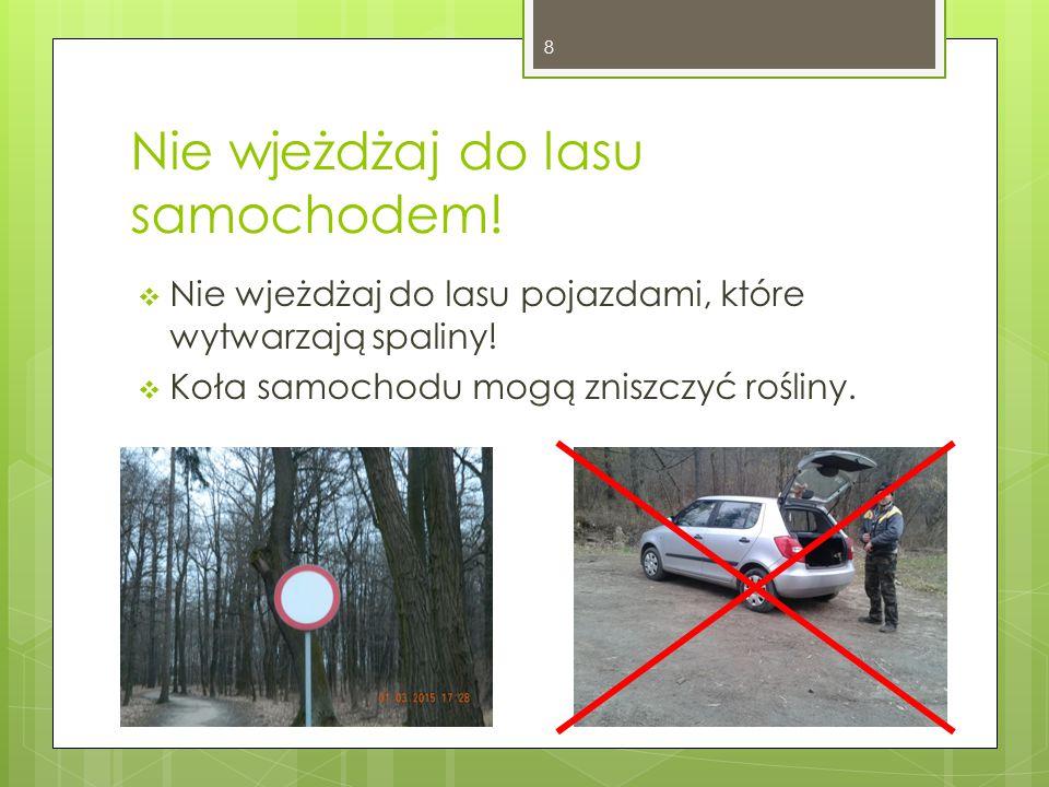 Nie wjeżdżaj do lasu samochodem. Nie wjeżdżaj do lasu pojazdami, które wytwarzają spaliny.