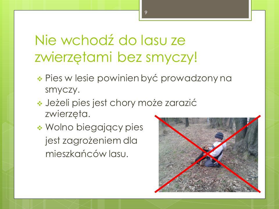 Nie wchodź do lasu ze zwierzętami bez smyczy. Pies w lesie powinien być prowadzony na smyczy.