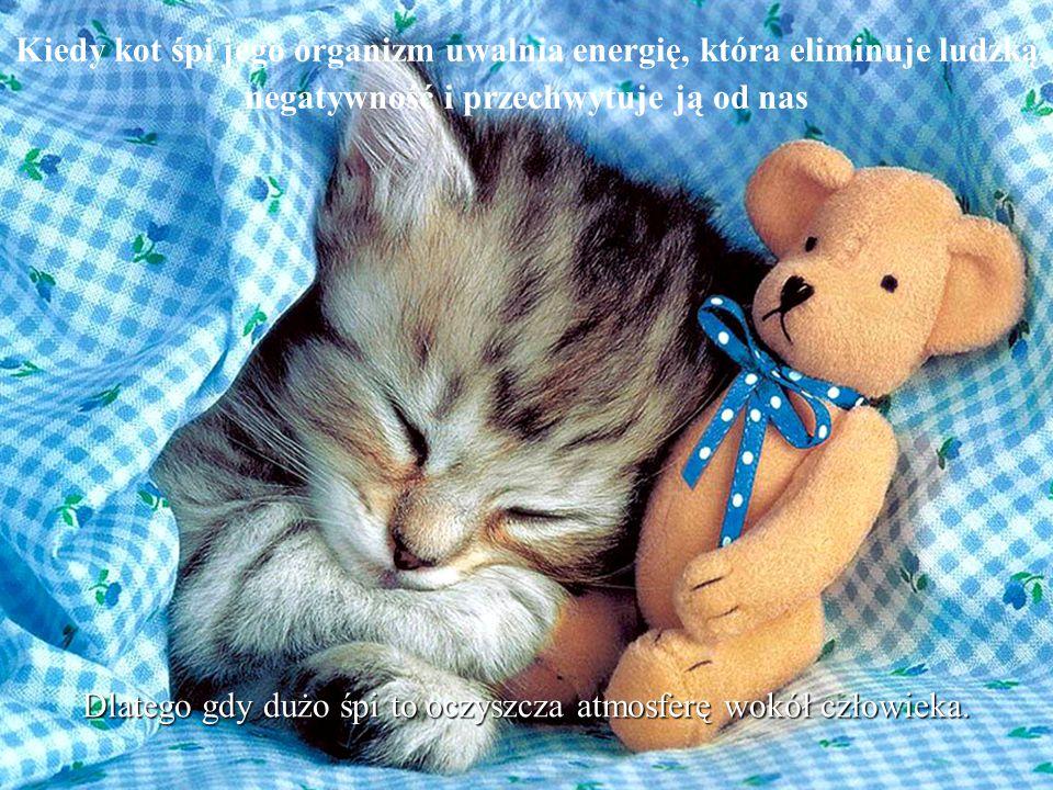Kiedy kot śpi jego organizm uwalnia energię, która eliminuje ludzką negatywność i przechwytuje ją od nas Dlatego gdy dużo śpi to oczyszcza atmosferę wokół człowieka.
