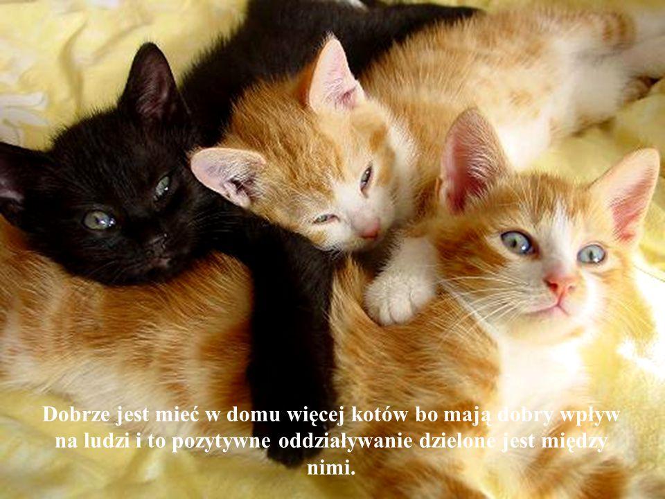 Dobrze jest mieć w domu więcej kotów bo mają dobry wpływ na ludzi i to pozytywne oddziaływanie dzielone jest między nimi.