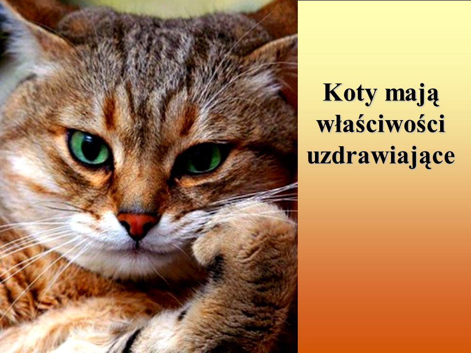 Koty mają właściwości uzdrawiające
