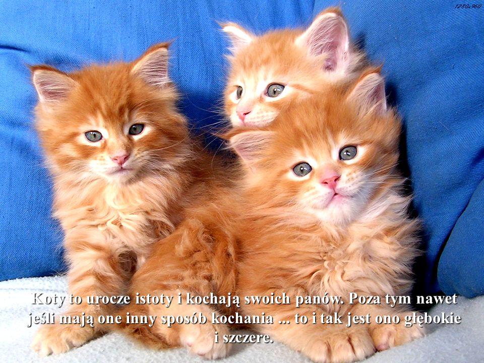 Koty to urocze istoty i kochają swoich panów.Poza tym nawet jeśli mają one inny sposób kochania...