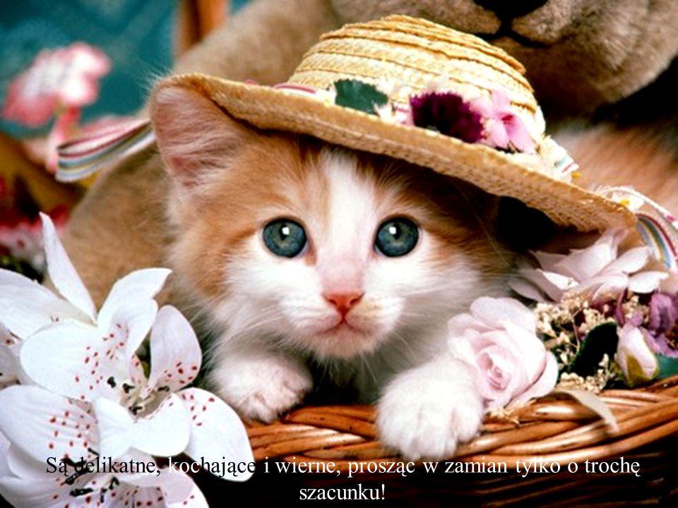 Koty to urocze istoty i kochają swoich panów. Poza tym nawet jeśli mają one inny sposób kochania... to i tak jest ono głębokie i szczere.