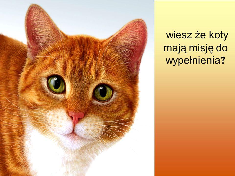 wiesz że koty mają misję do wypełnienia ?