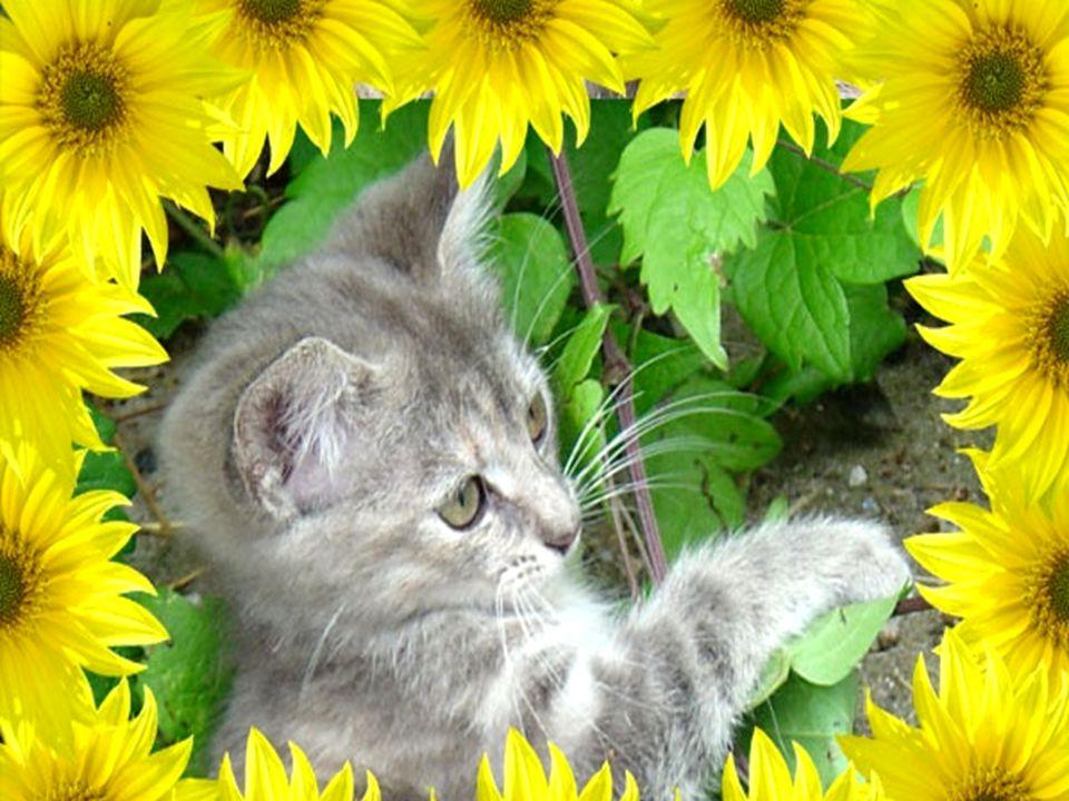 Pamiętaj... naprawdę nie przeganiaj żadnego kota przy najbliższej okazji