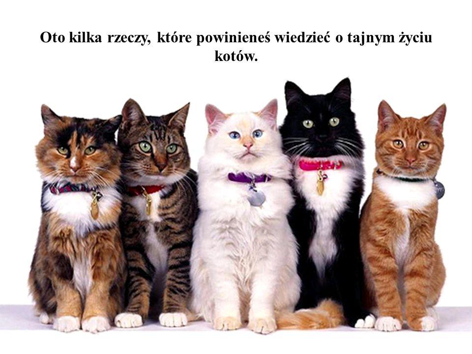 Czy zastanawialiście się, dlaczego dzisiaj jest więcej ludzi, którzy mają koty a nie psy?