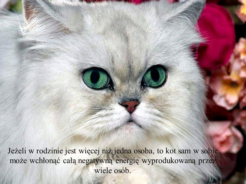 Wszystkie koty mają zdolność do tłumienia negatywnych energii w domu i wśród istot, które je otaczają.