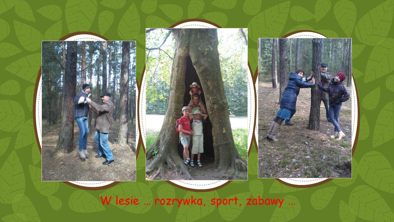 W lesie … rozrywka, sport, zabawy …