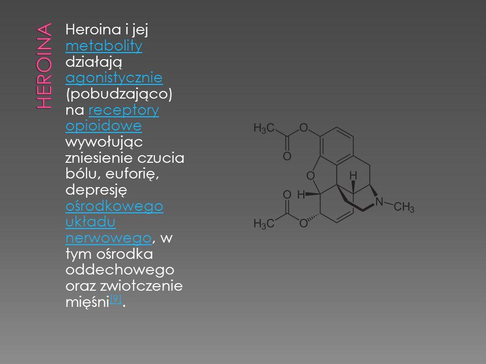 Heroina i jej metabolity działają agonistycznie (pobudzająco) na receptory opioidowe wywołując zniesienie czucia bólu, euforię, depresję ośrodkowego u