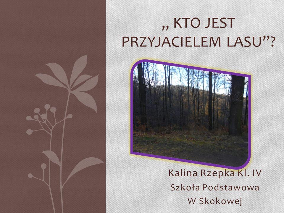 """Kalina Rzepka Kl. IV Szkoła Podstawowa W Skokowej """" KTO JEST PRZYJACIELEM LASU""""?"""