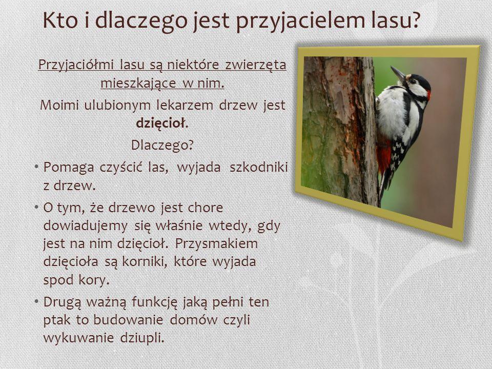 Kto i dlaczego jest przyjacielem lasu? Przyjaciółmi lasu są niektóre zwierzęta mieszkające w nim. Moimi ulubionym lekarzem drzew jest dzięcioł. Dlacze