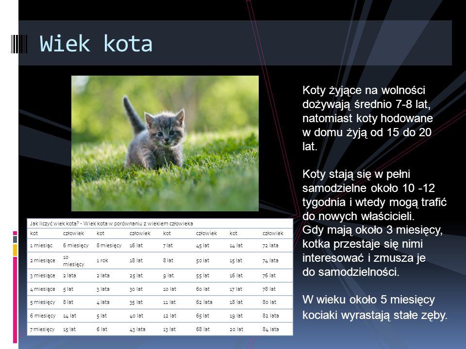 Wiek kota Jak liczyć wiek kota.