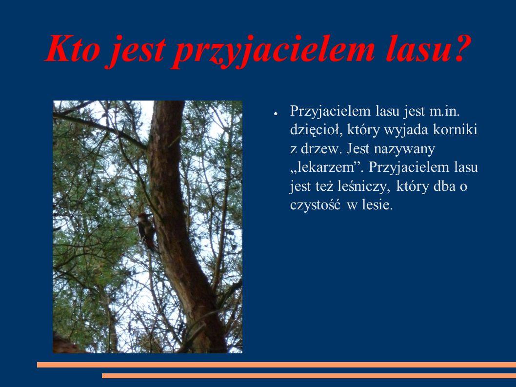 """Kto jest przyjacielem lasu? ● Przyjacielem lasu jest m.in. dzięcioł, który wyjada korniki z drzew. Jest nazywany """"lekarzem"""". Przyjacielem lasu jest te"""