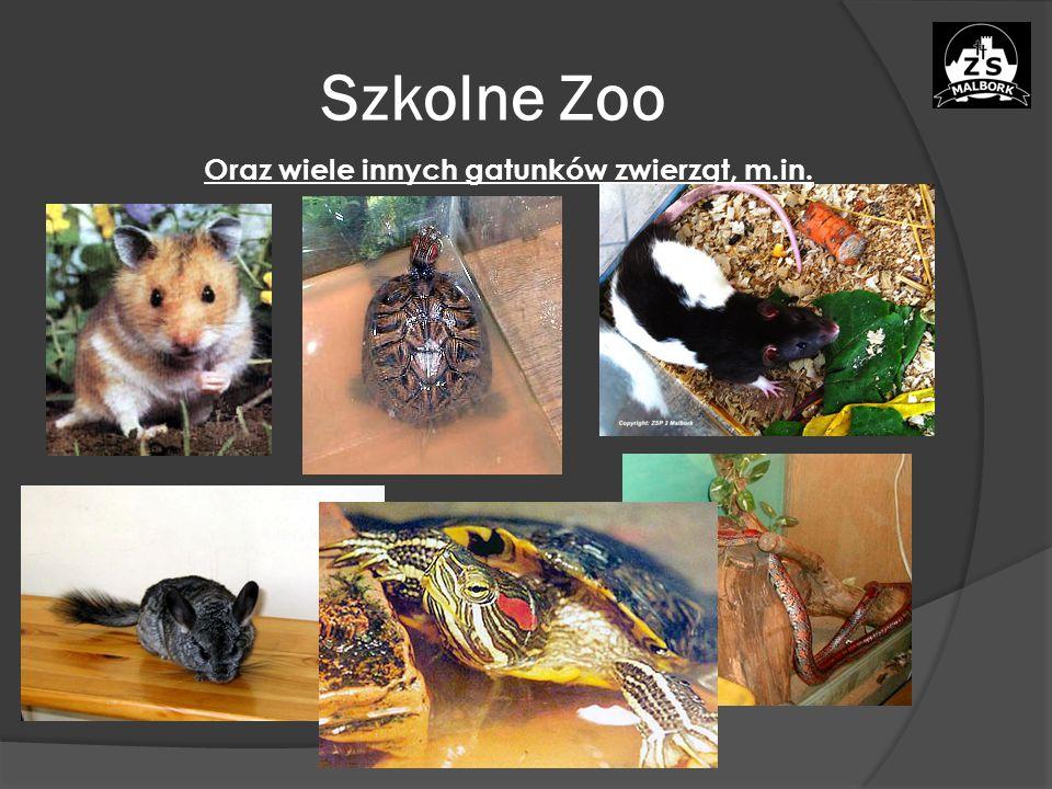 Szkolne Zoo Oraz wiele innych gatunków zwierząt, m.in.