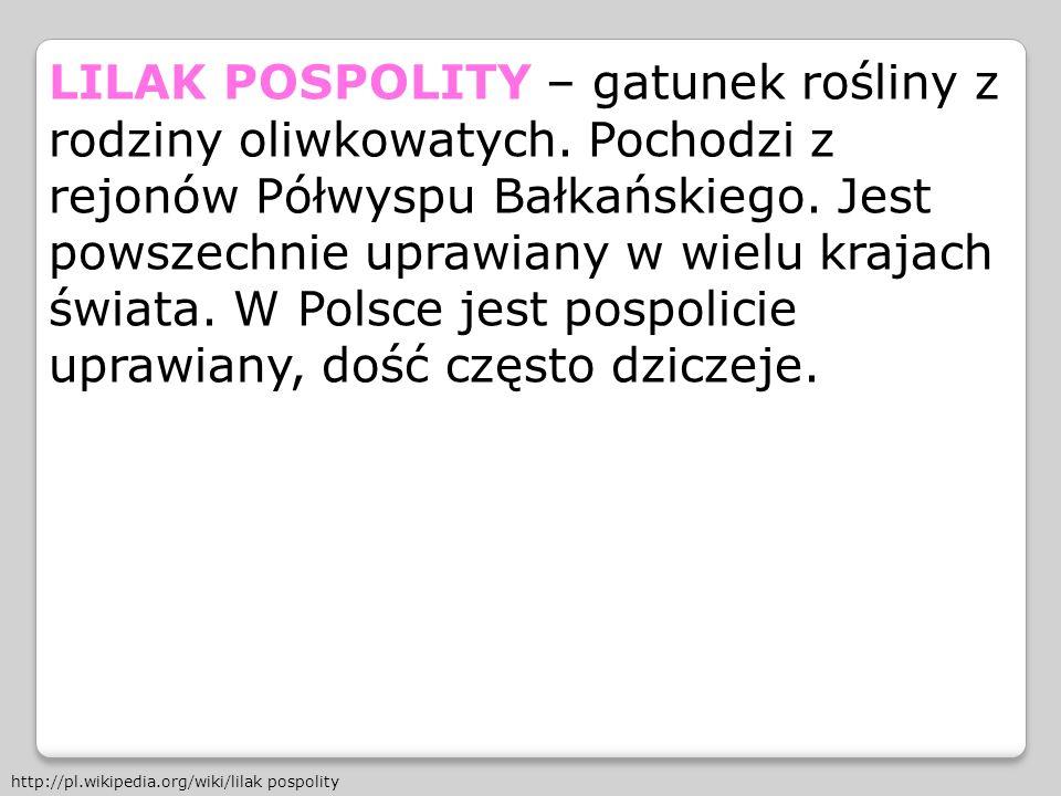 LILAK POSPOLITY – gatunek rośliny z rodziny oliwkowatych. Pochodzi z rejonów Półwyspu Bałkańskiego. Jest powszechnie uprawiany w wielu krajach świata.