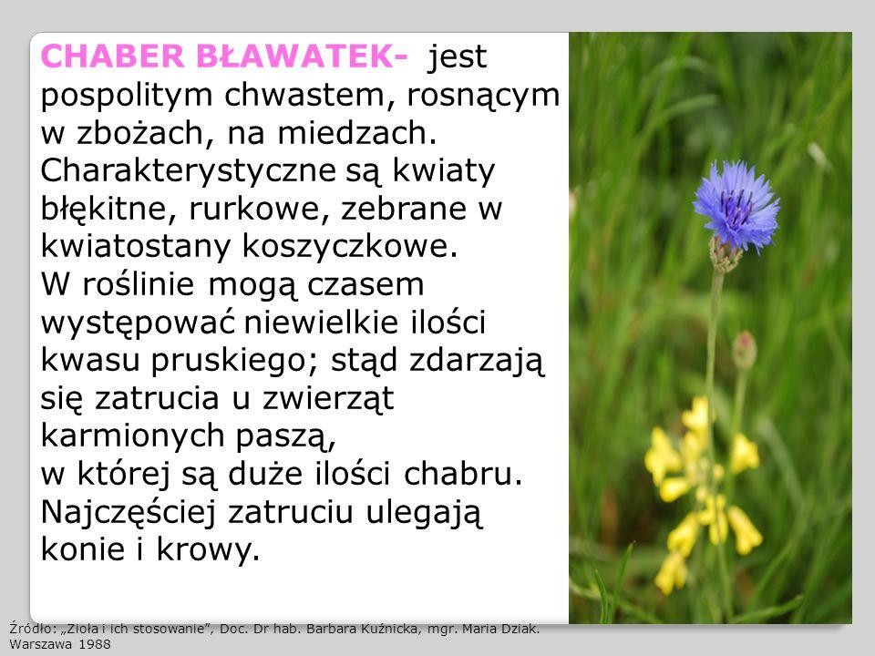 CHABER BŁAWATEK- jest pospolitym chwastem, rosnącym w zbożach, na miedzach. Charakterystyczne są kwiaty błękitne, rurkowe, zebrane w kwiatostany koszy