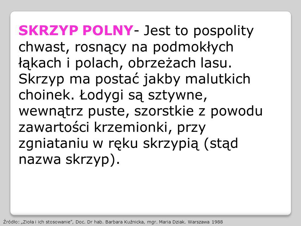 SKRZYP POLNY- Jest to pospolity chwast, rosnący na podmokłych łąkach i polach, obrzeżach lasu. Skrzyp ma postać jakby malutkich choinek. Łodygi są szt