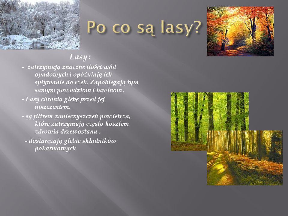 Lasy : - zatrzymują znaczne ilości wód opadowych i opóźniają ich spływanie do rzek. Zapobiegają tym samym powodziom i lawinom. - Lasy chronią glebę pr