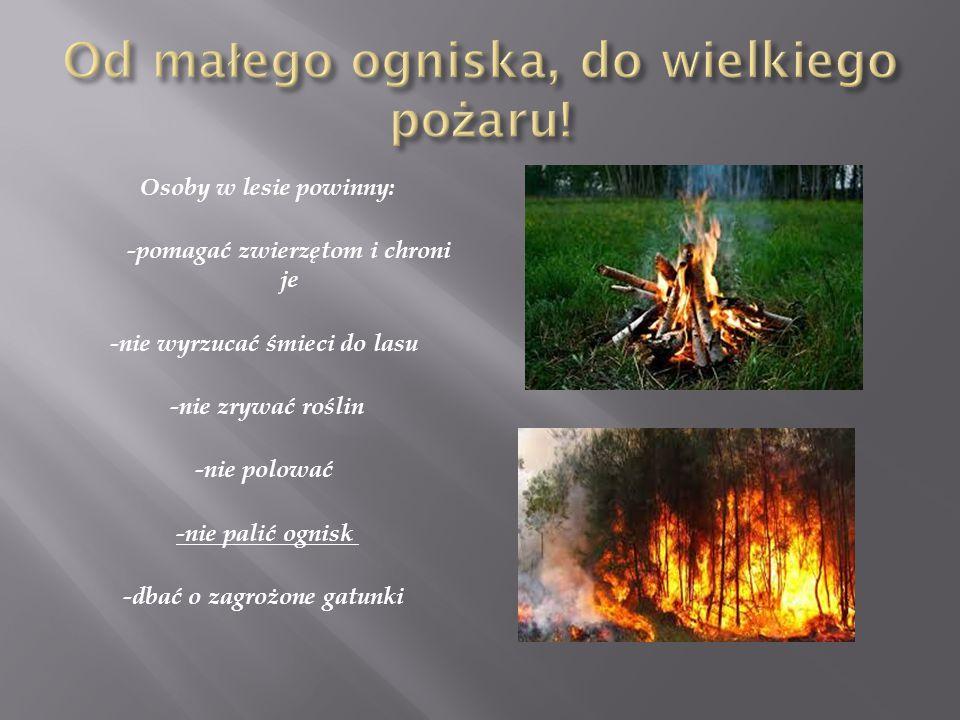 Osoby w lesie powinny: -pomagać zwierzętom i chroni je -nie wyrzucać śmieci do lasu -nie zrywać roślin -nie polować -nie palić ognisk -dbać o zagrożon