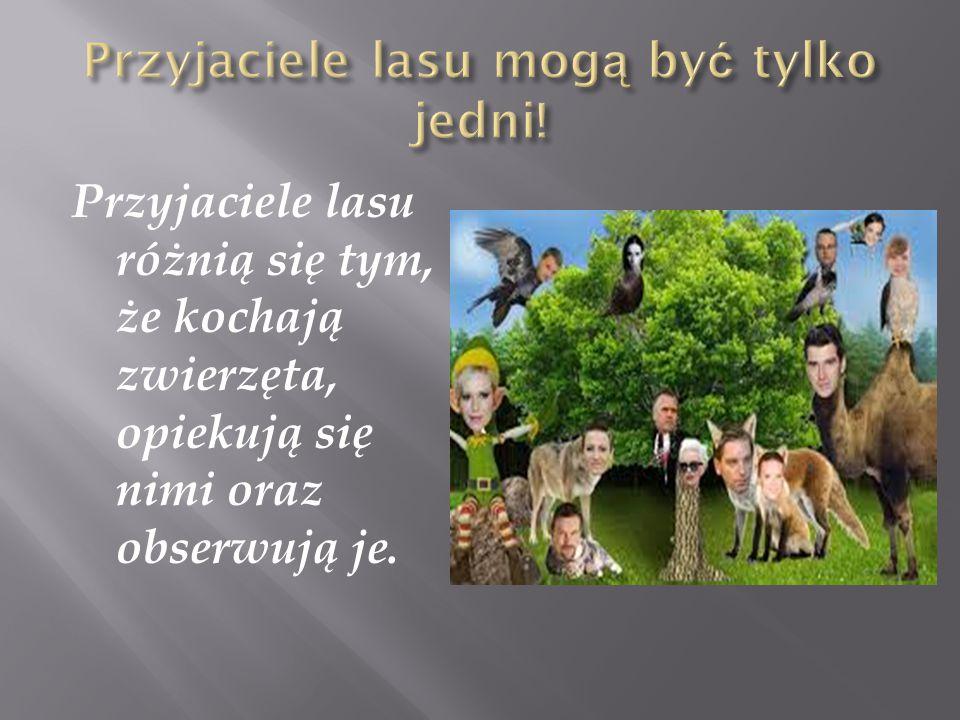 Przyjaciele lasu różnią się tym, że kochają zwierzęta, opiekują się nimi oraz obserwują je.