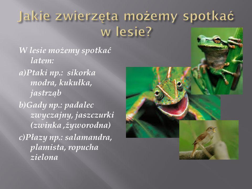 W lesie możemy spotkać latem: a)Ptaki np.: sikorka modra, kukułka, jastrząb b)Gady np.: padalec zwyczajny, jaszczurki (zwinka,żyworodna) c)Płazy np.: