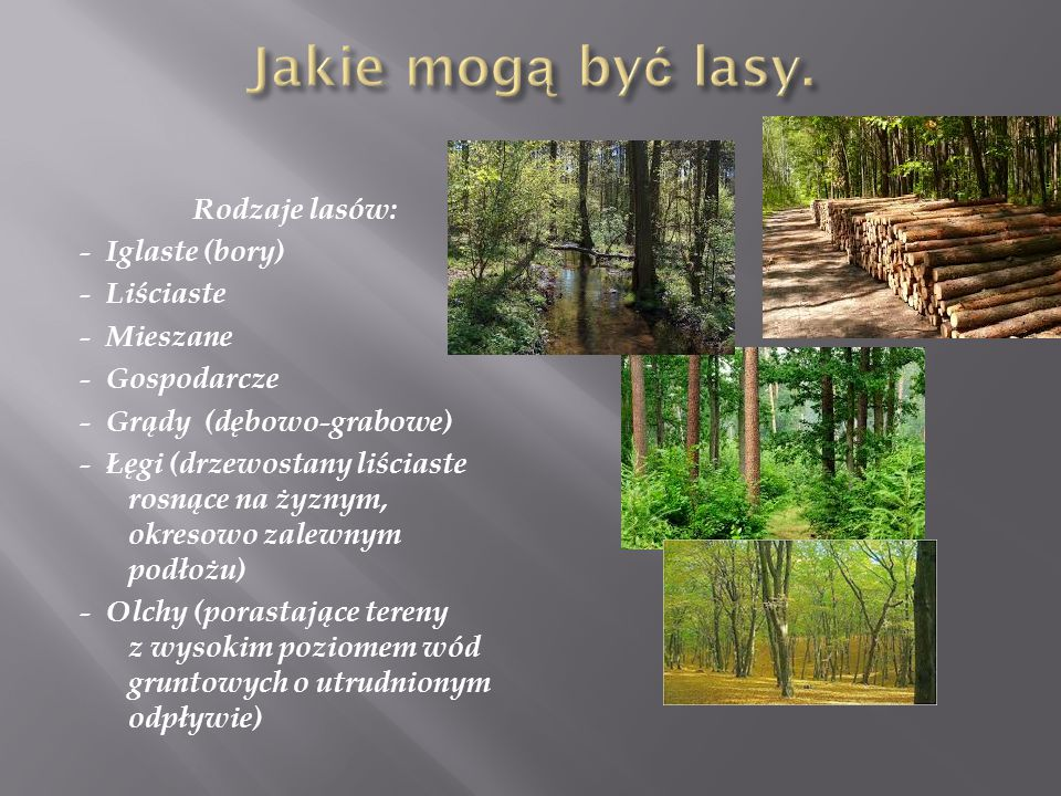 Rodzaje lasów: - Iglaste (bory) - Liściaste - Mieszane - Gospodarcze - Grądy (dębowo-grabowe) - Łęgi (drzewostany liściaste rosnące na żyznym, okresowo zalewnym podłożu) - Olchy (porastające tereny z wysokim poziomem wód gruntowych o utrudnionym odpływie)