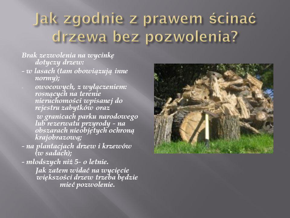 Brak zezwolenia na wycinkę dotyczy drzew: - w lasach (tam obowiązują inne normy); - owocowych, z wyłączeniem: rosnących na terenie nieruchomości wpisanej do rejestru zabytków oraz w granicach parku narodowego lub rezerwatu przyrody - na obszarach nieobjętych ochroną krajobrazową; - na plantacjach drzew i krzewów (w sadach); - młodszych niż 5- o letnie.