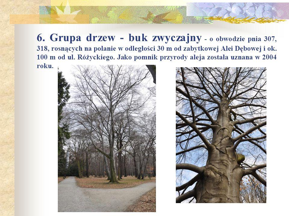 6. Grupa drzew - buk zwyczajny - o obwodzie pnia 307, 318, rosnących na polanie w odległości 30 m od zabytkowej Alei Dębowej i ok. 100 m od ul. Różyck