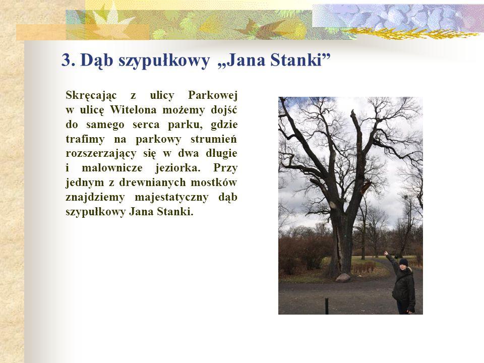 """3. Dąb szypułkowy """"Jana Stanki"""" Skręcając z ulicy Parkowej w ulicę Witelona możemy dojść do samego serca parku, gdzie trafimy na parkowy strumień rozs"""