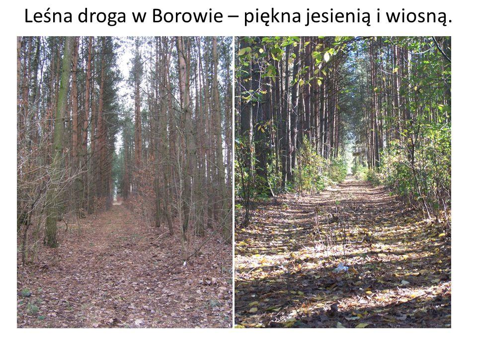 Leśna droga w Borowie – piękna jesienią i wiosną.