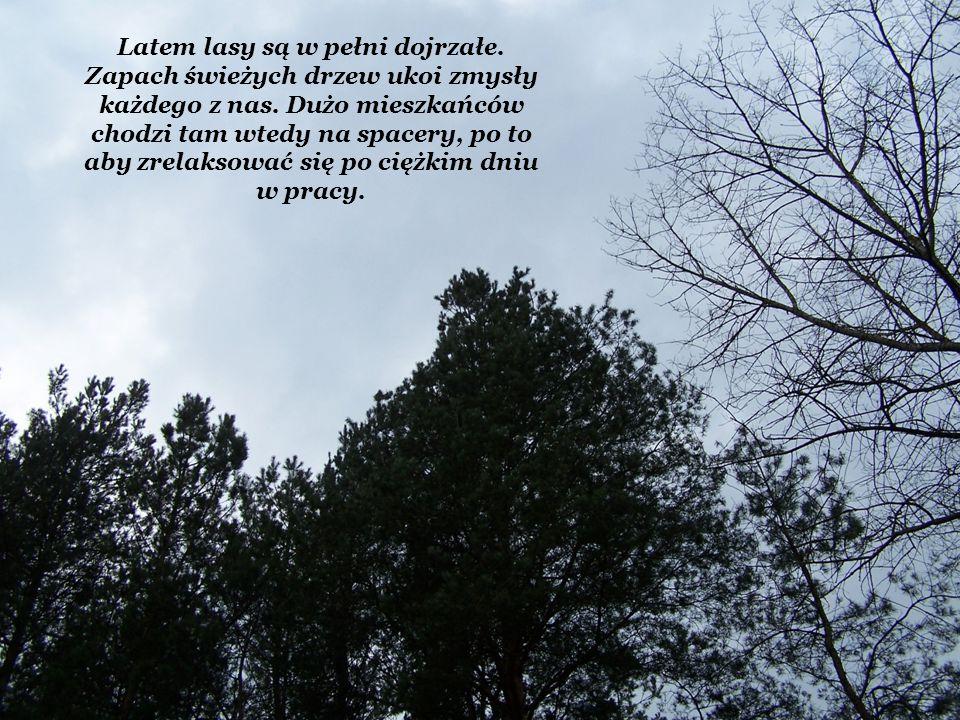 Latem lasy są w pełni dojrzałe. Zapach świeżych drzew ukoi zmysły każdego z nas. Dużo mieszkańców chodzi tam wtedy na spacery, po to aby zrelaksować s