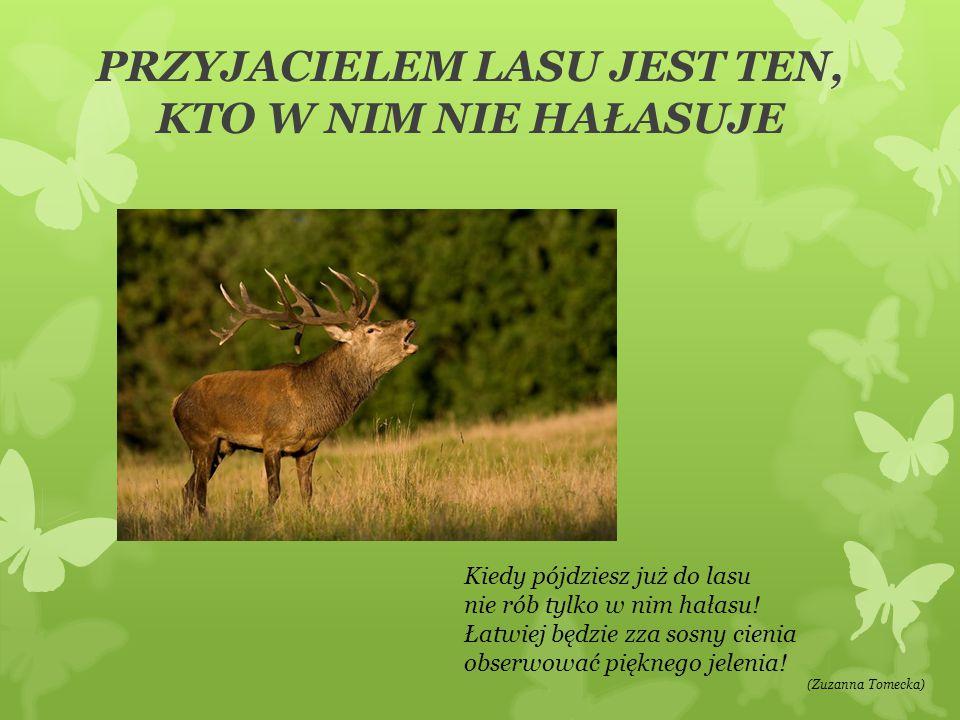 PRZYJACIELEM LASU JEST TEN, KTO NIE NISZCZY DRZEW Idąc lasem wciąż pamiętaj, że mieszkają tu zwierzęta.
