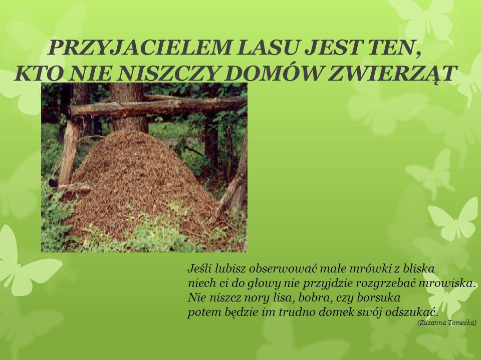 PRZYJACIELEM LASU JEST TEN, KTO NIE NISZCZY DOMÓW ZWIERZĄT Jeśli lubisz obserwować małe mrówki z bliska niech ci do głowy nie przyjdzie rozgrzebać mro