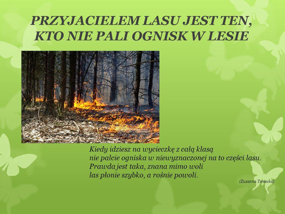 PRZYJACIELEM LASU JEST TEN, KTO NIE PALI OGNISK W LESIE Kiedy idziesz na wycieczkę z całą klasą nie palcie ogniska w niewyznaczonej na to części lasu.