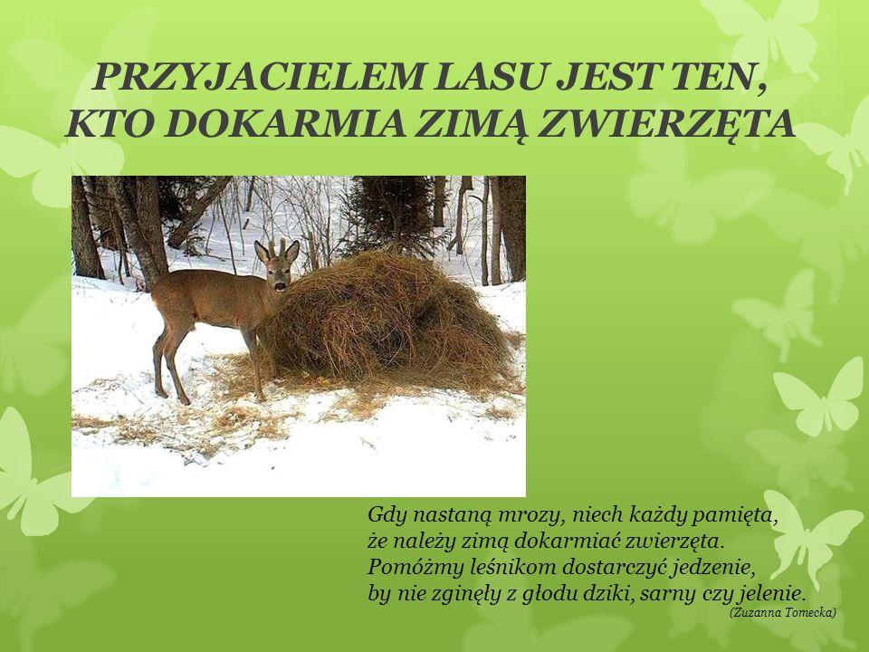 PRZYJACIELEM LASU JEST TEN, KTO DOKARMIA ZIMĄ ZWIERZĘTA Gdy nastaną mrozy, niech każdy pamięta, że należy zimą dokarmiać zwierzęta. Pomóżmy leśnikom d