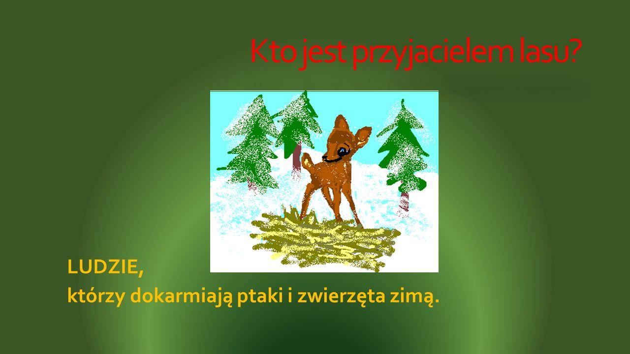 Kto jest przyjacielem lasu? LUDZIE, którzy dokarmiają ptaki i zwierzęta zimą.