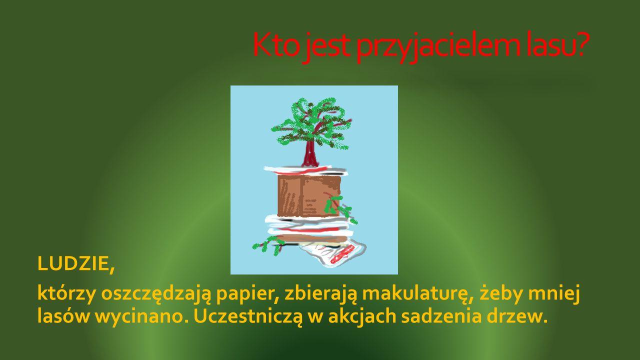 Kto jest przyjacielem lasu? LUDZIE, którzy oszczędzają papier, zbierają makulaturę, żeby mniej lasów wycinano. Uczestniczą w akcjach sadzenia drzew.