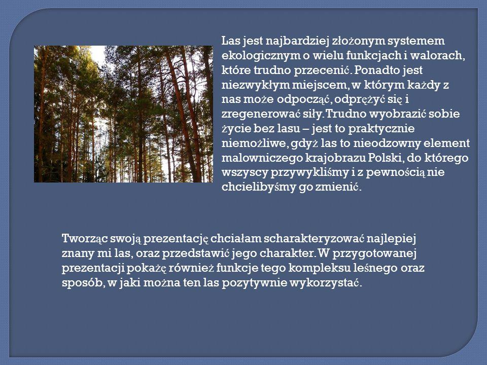 Przedstawiony w prezentacji las znajduje si ę w p ł n.-wsch.
