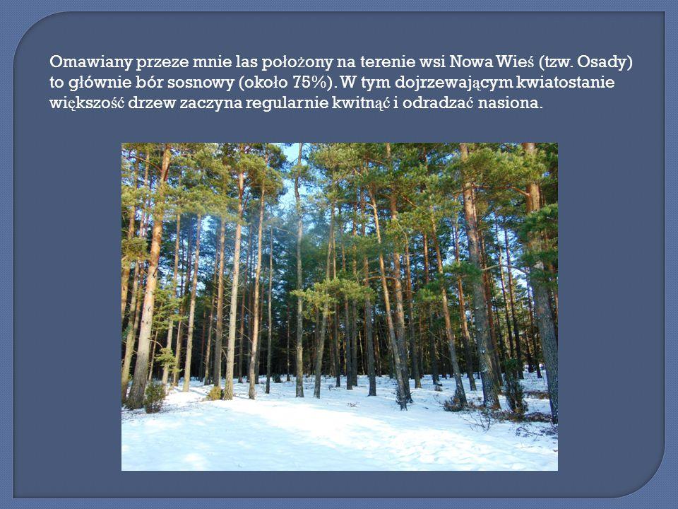Omawiany przeze mnie las po ł o ż ony na terenie wsi Nowa Wie ś (tzw.