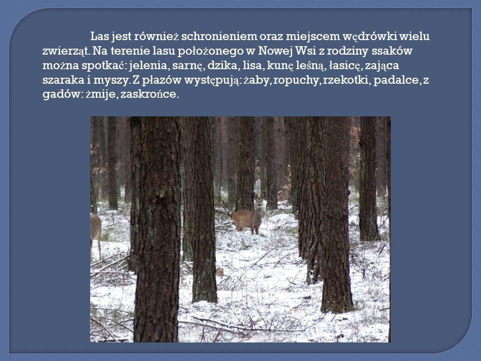 Las jest równie ż schronieniem oraz miejscem w ę drówki wielu zwierz ą t.