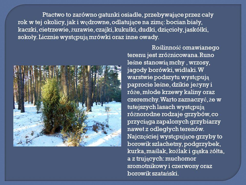 Funkcje gospodarcze tego lasu to g ł ównie mo ż liwo ść pozyskania drewna do u ż ytku publicznego oraz prywatnego, gdy ż przez teren lasu nie przebiegaj ą ś cie ż ki naukowe, edukacyjne itp.