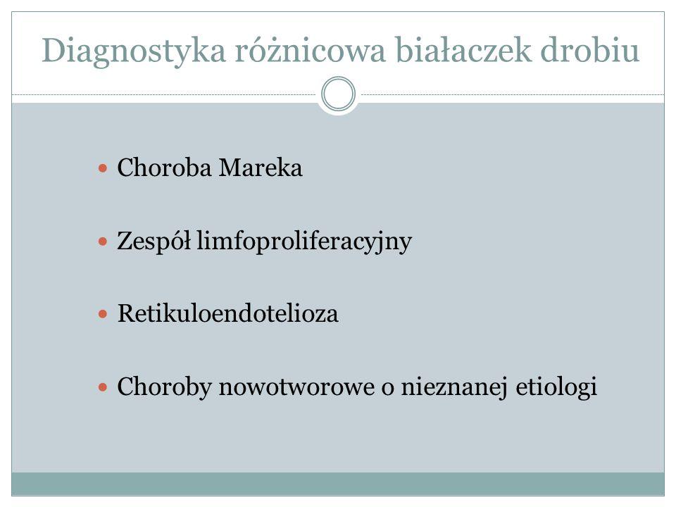 Diagnostyka różnicowa białaczek drobiu Choroba Mareka Zespół limfoproliferacyjny Retikuloendotelioza Choroby nowotworowe o nieznanej etiologi