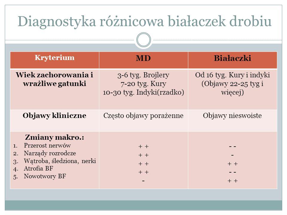 Kryterium MDBiałaczki Wiek zachorowania i wrażliwe gatunki 3-6 tyg. Brojlery 7-20 tyg. Kury 10-30 tyg. Indyki(rzadko) Od 16 tyg. Kury i indyki (Objawy