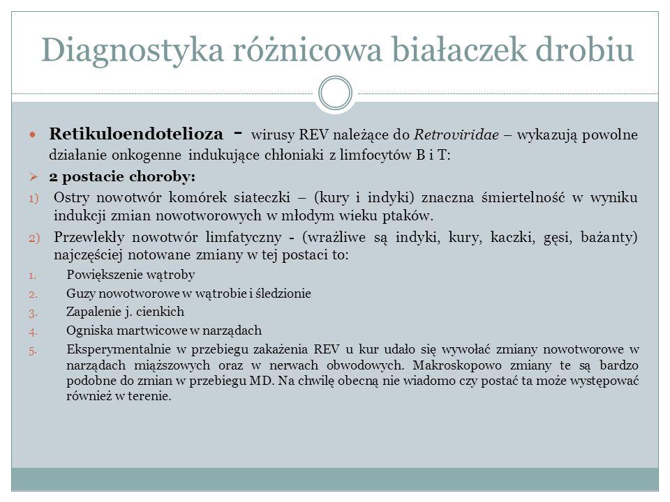 Retikuloendotelioza - wirusy REV należące do Retroviridae – wykazują powolne działanie onkogenne indukujące chłoniaki z limfocytów B i T:  2 postacie