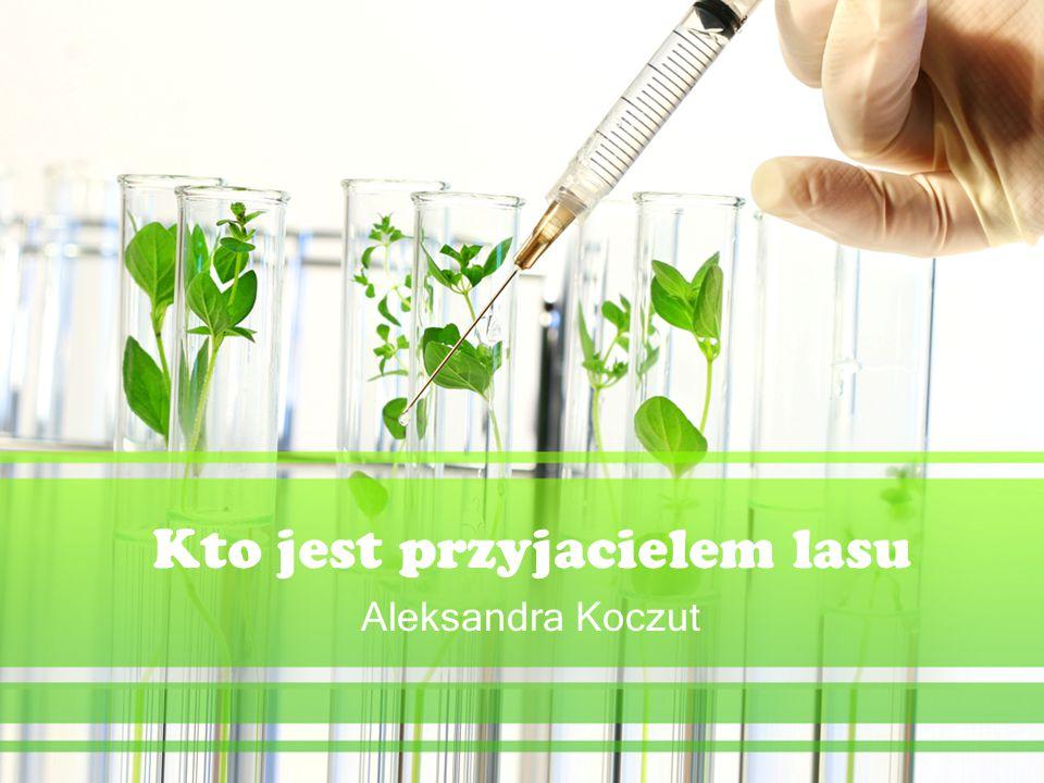 Kto jest przyjacielem lasu Aleksandra Koczut