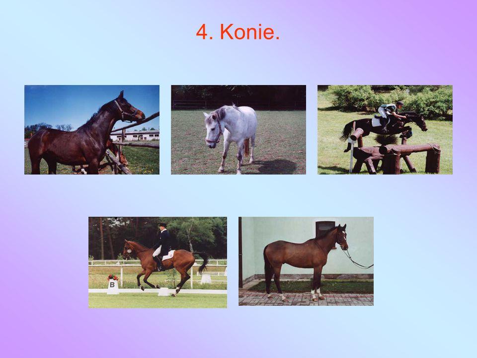 4. Konie.